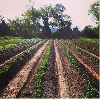 Pitch Pine Farm