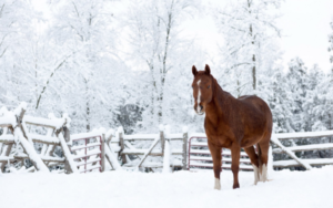 Cover photo for Equine Update Winter 2017