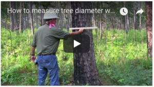 Cover photo for New Educational Videos Available From Extension Forestry