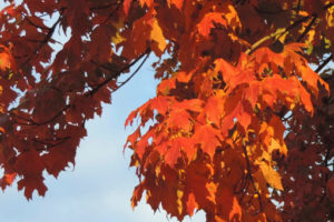 Cover photo for Change Is in the Air: The Miracle of Fall Colors