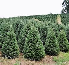 Cover photo for Choose and Cut Christmas Tree Farms in Transylvania County, NC