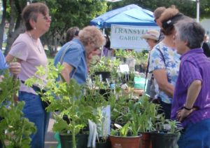 Cover photo for Transylvania Gardening Groups Spring Plant Sale 2019!