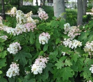 Cover photo for Extension Master Gardener Program - the Benefits of Native Plants