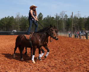 Willow Griffith demonstrated Roman Riding at the Livestock Arena.