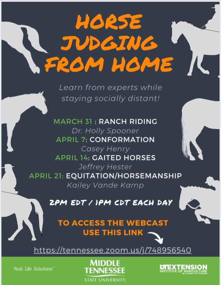 Horse Judging From Home University of Tennessee