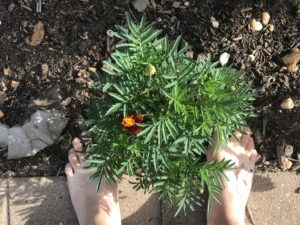 barefoot in garden soil