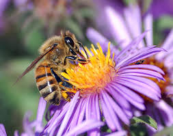 Cover photo for Transylvania County Beekeeping Association October Meeting