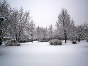 Cover photo for January Garden Tasks in Transylvania County