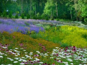 Perennial plant bed