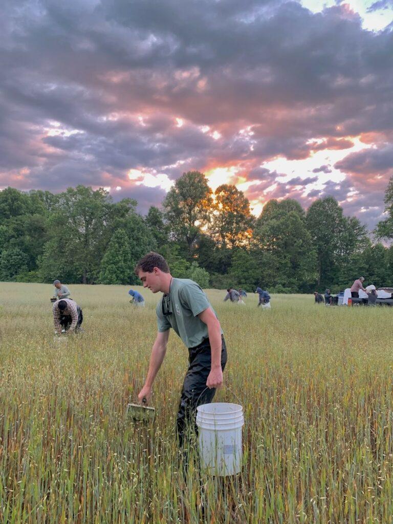 Man carrying bucket in field
